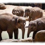 Bunyip Creations Elephants